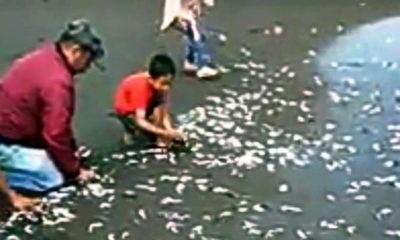 Jutaan Ikan Loncat Terdampar di Pantai Tanjungsari Jember
